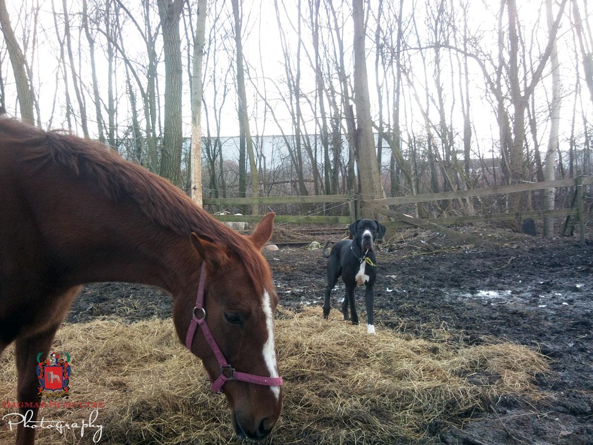 Sultan und Pferd